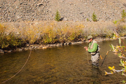 Butte, USA-October 1,2012: Senior man fly fishing the Wise River, a tributary of the Big Hole River, in early fall.